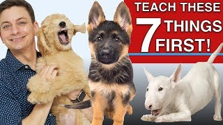 how-to-teach-the-first-7-things-to-your-dog-sit-leave-it-come-leash-walking-name