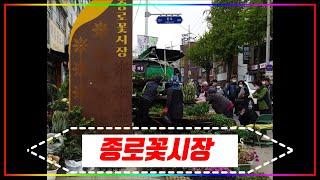 [데이트코스] 종로6가 종로꽃시장, Jongno Flo…