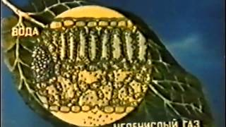 Роль хлоропластов в фотосинтезе