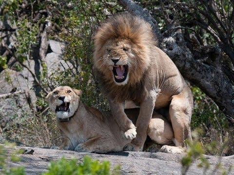 Смешные дикые животных