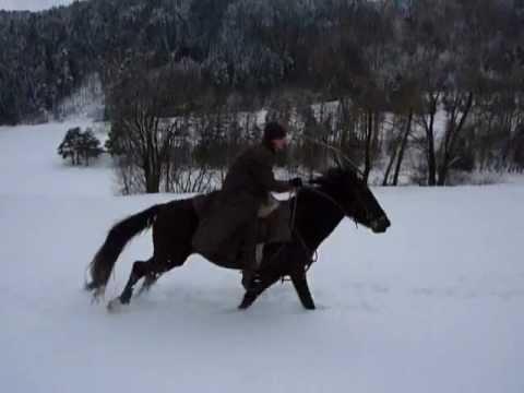 Kabardiner Horse