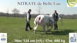 NITRATE DE BELLE EAU
