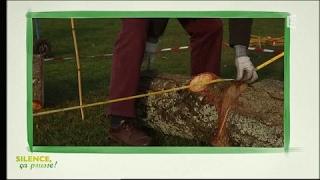 Conseil pratique : planter un Cerisier des Oiseaux - Silence, ça pousse !