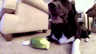 Can Dogs Eat Zucchini?