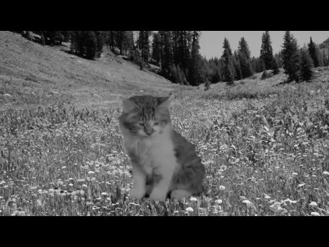 Minor Victories - Scattered Ashes (song for Richard)