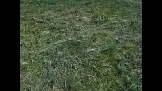 Бритьё лугового газона как обыкновенного на улице Свердлова в Подольске