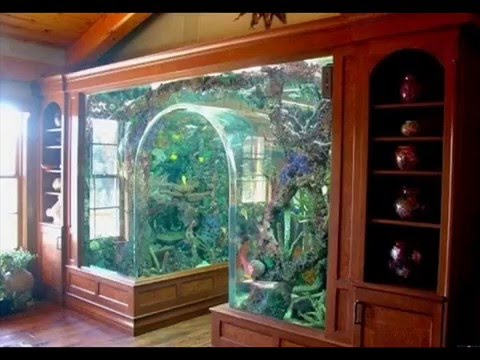 Beautiful home aquariums youtube Beautiful aquariums for home