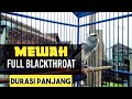 Kenari Panda Gacor Full Isian Blackthroat Durasi Panjang  Mp3 - Mp4 Download