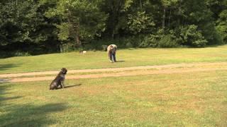 Duck Retriever - Dog Training