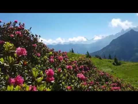 Film: Alpenrosenblüte am Fellhorn