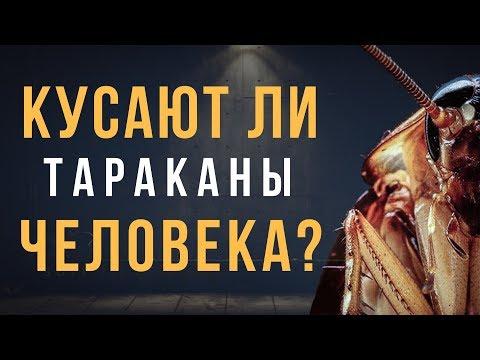 Кусают ли тараканы человека?