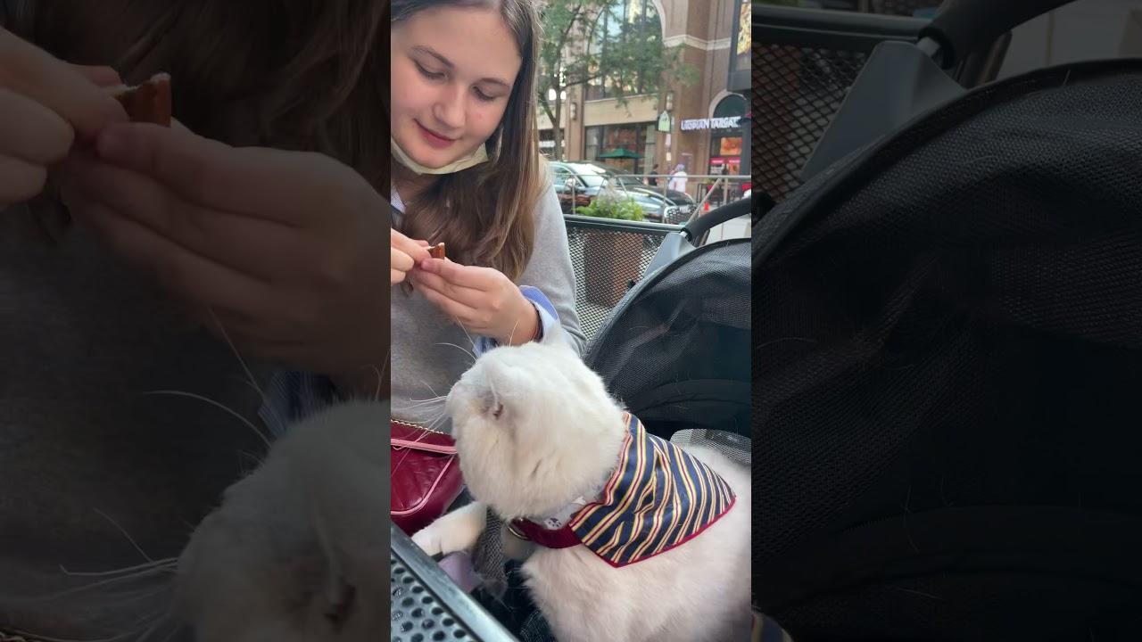 Hungry cat Apollo!