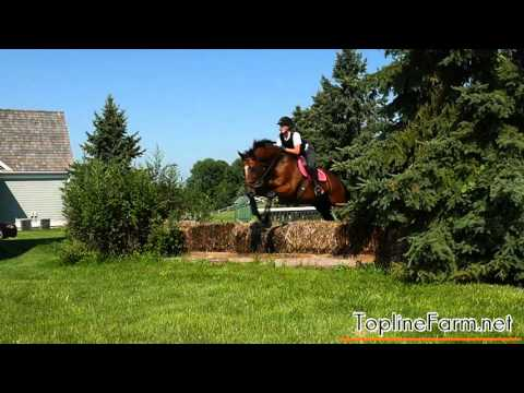Topline Farm Horse Boarding Training Private Lessons Alexandria Township Hunterdon County New Jersey