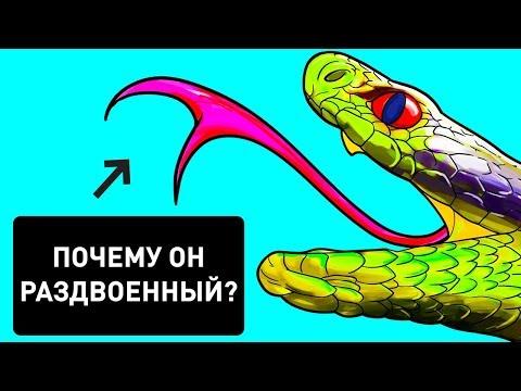 Почему у змей раздвоен язык