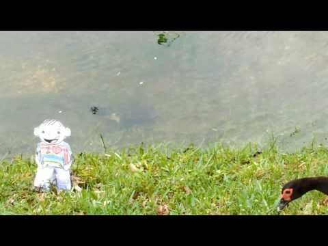 Julia Smith's Flat Stanley feeding turtles 1