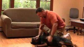 Rocky's Big Day (funny Dog Video Rottweiler  Labrador Mix)