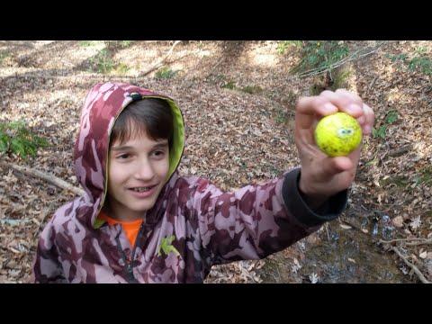 Golf Ball Hunting Battle!