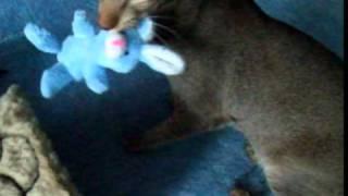 oriental cat (с зайцем нисудьбы)