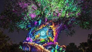 "Tree of Life: Awakenings ""The Lion King"" Projection Show at Disney's Animal Kingdom - Disney World"