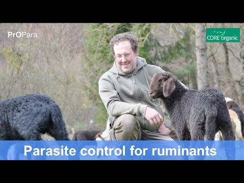 Parasite control for organic ruminants - CORE Organic/PrOPara (Nov 2016)