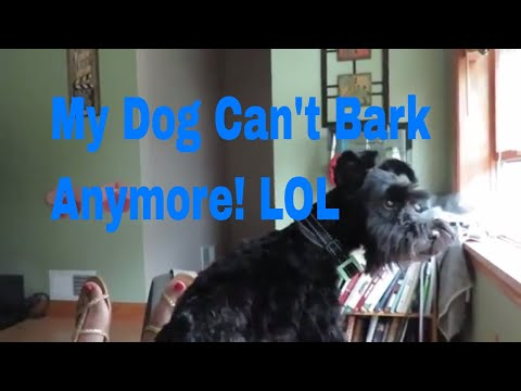No Bark Collar REView! with Video Proof!