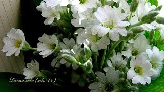 Красивое поздравление с 8 Марта. Цветная и позитивная открытка
