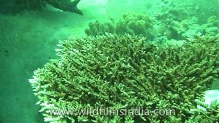 Coral reefs in India | Andaman sea