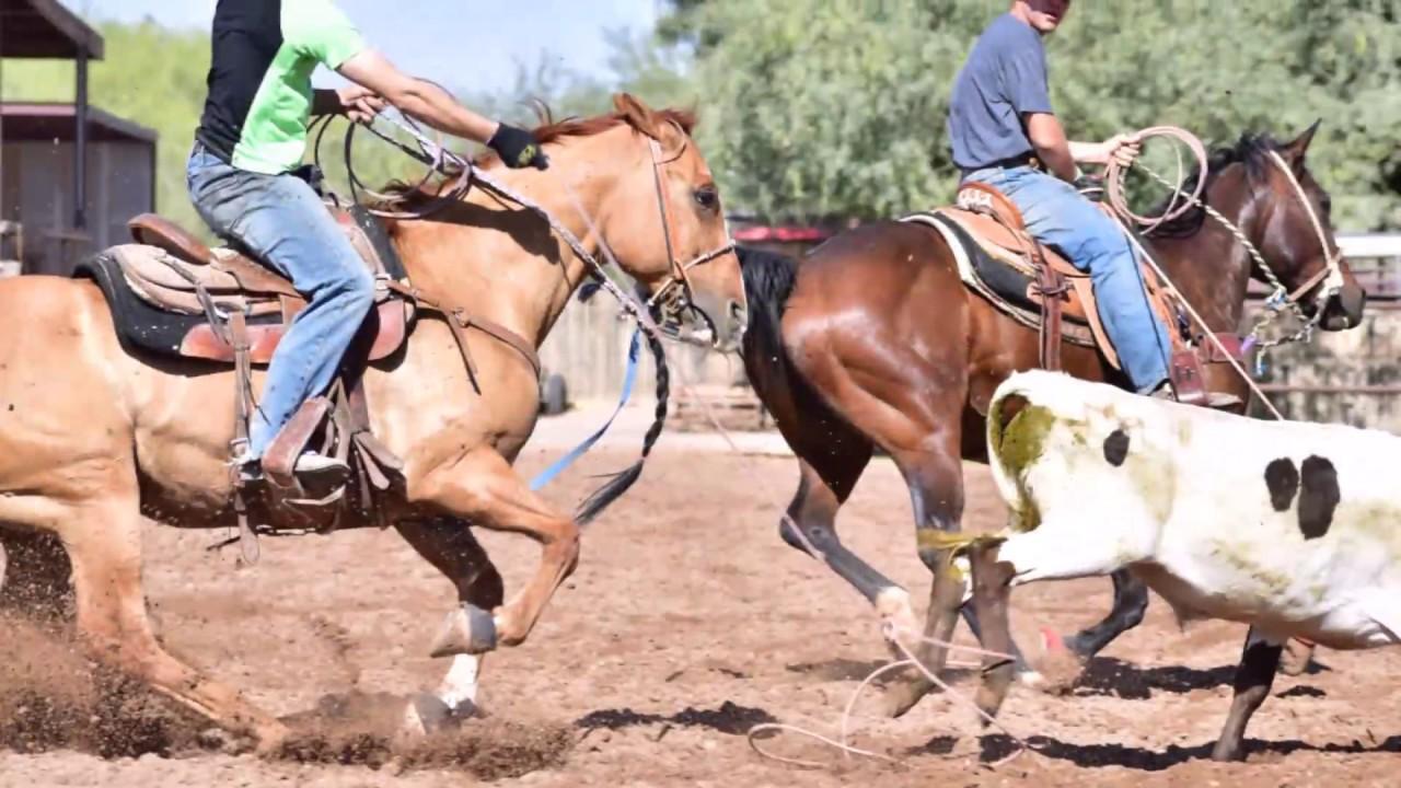 Team roping horses