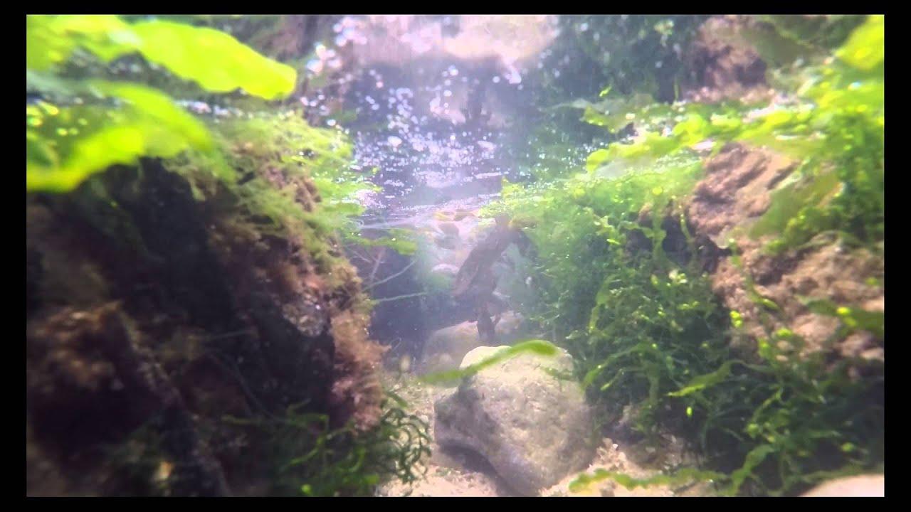 Download GoPro Rhosneigr Rock Pool