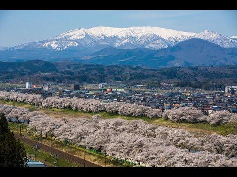 JG 宮城 白石川堤一目千本桜 Shiroishigawa,Miyagi