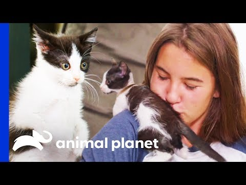 Looking After A Kitten With Suspected Feline Leukaemia | Amanda To The Rescue