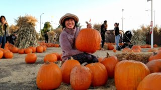 Bí vàng, bắp ngô, nhộn nhịp lễ hội Halloween ở San Jose