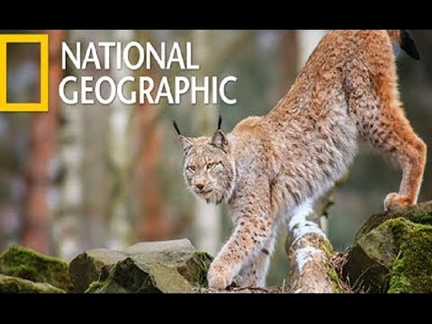 Wildlife - Dangerous Predators in The Blackwater Swamp (Nat Geo Wild)