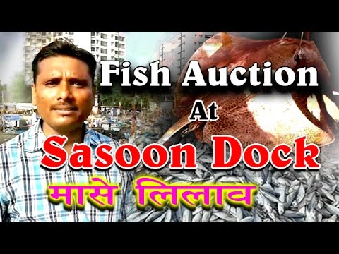 Fish Auction At Sasoon Dock At Wholesale Rates