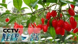 《健康之路》 20190721 植物全身都是宝(三)| CCTV科教