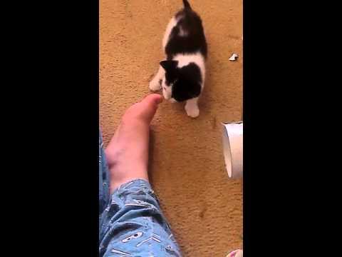 Kitten Licking Toes
