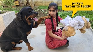 Anshu destroyed Jerry's favourite Teddy||cute dog video.