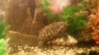 Террариум 400 литров! Красноухие черепахи с рыбками (продолжение)