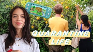 Quarantine VLOG & Personal Q&A: Favorites, Hobbies, Marriage, Plant Update!