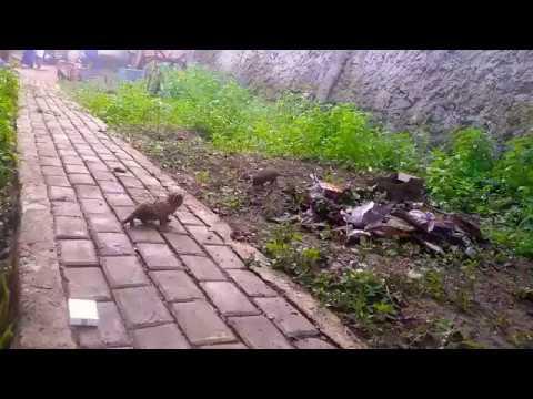 50 Koleksi Gambar Hewan Macan Akar Terbaru