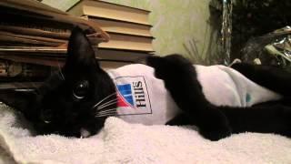 кошка после стерилизации и удалении матки