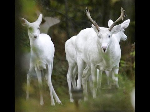 Boy Who Shot Albino Deer With Crossbow Receives Death Threats