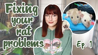 """Help! My rats are destroying their cage"" 