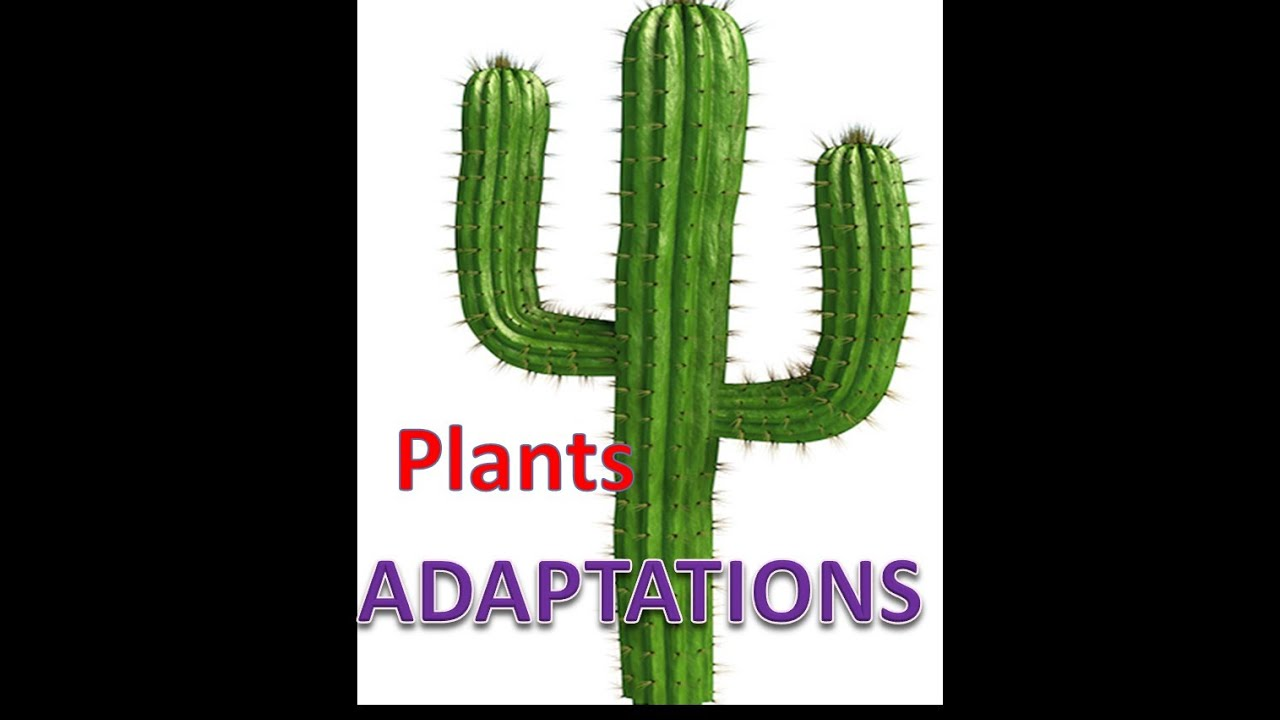 Plant Adaptations Lesson with Quiz YouTube – Plant Adaptations Worksheet