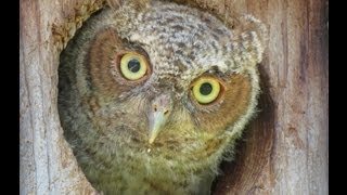 Florida Screech Owl Cam May 7th - Live From Outside The Owl Nest Box!