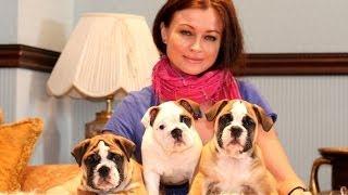 ЖмЯнькаем игрулю: щенок английского бульдога Маруся. PR company BulldogFILL. купить щенка.