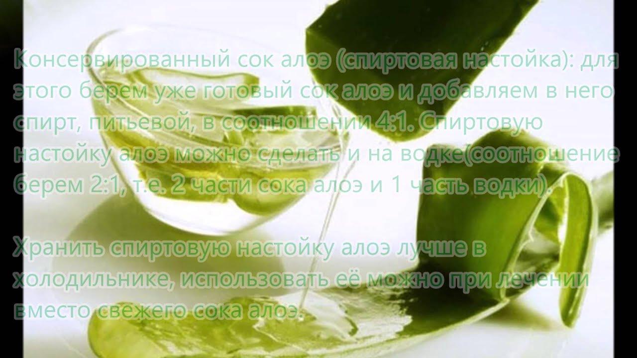 Настойка алоэ рецепты применения, приготовления и инструкция
