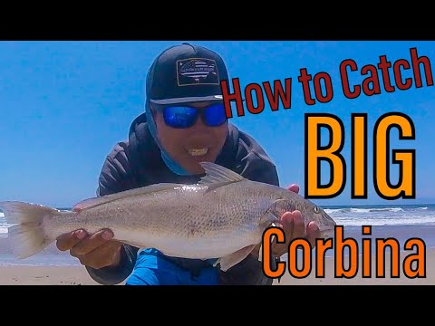 Socal Surf Fishing - How To Sightfish CORBINA