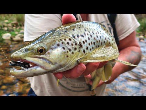 Trout Fishing Reward For Effort