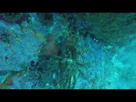 3 Monterey Dives